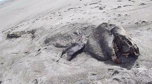"""El """"monstruo"""" de Pukehina Beach"""